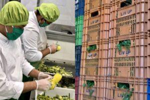 Live UP doa alimentos orgânicoa