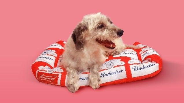 """Petz e Budweiser criam trono personalizado para os """"reis"""" do lar."""